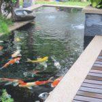 Desain Kolam Ikan Dan Taman Minimalis