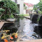 Desain Kolam Ikan Hias Kecil