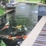 Contoh Desain Kolam Ikan Koi