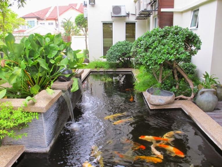 Desain Kolam Ikan Mas