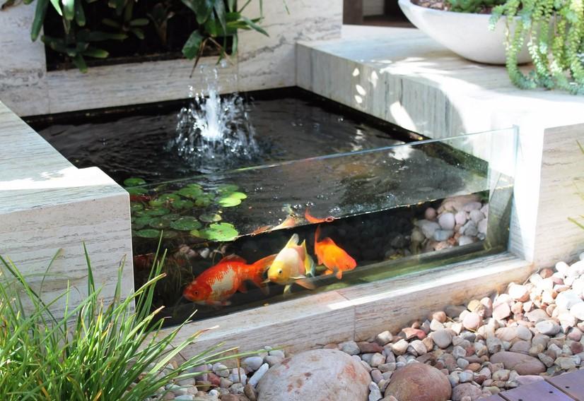 Desain Kolam Ikan Modern