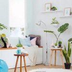 Hiasi rumah dengan bunga atau indoor plants