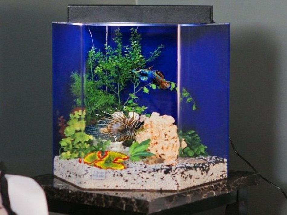 Meja aquarium